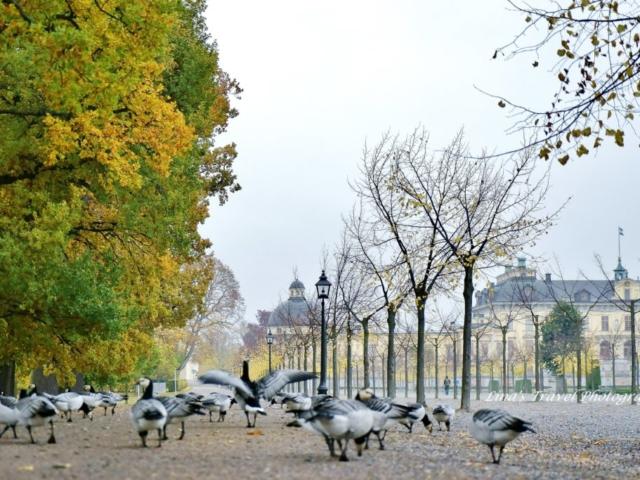 Drottningholm in Autumn's color, Stockholm, Sweden